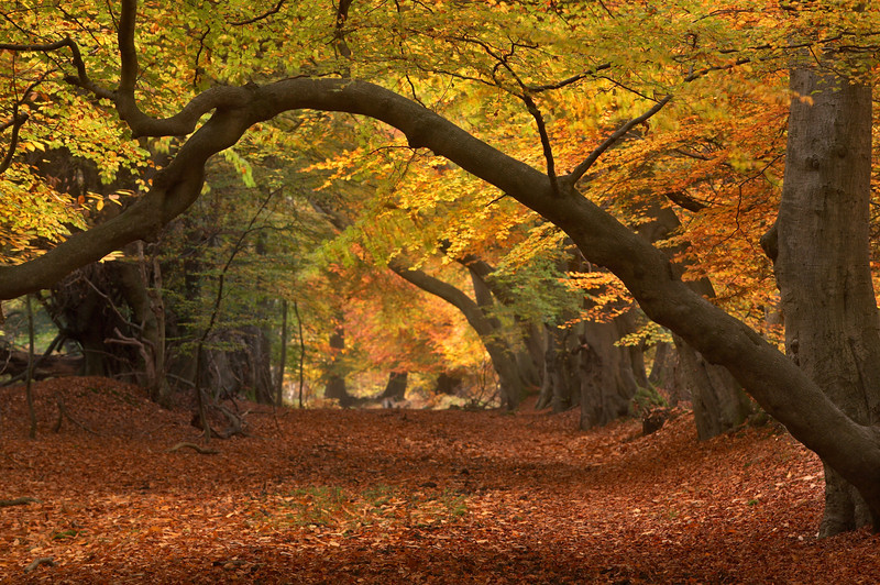 121 - Ashridge Autumn.jpg