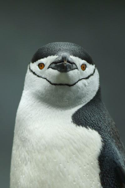 penguin2353.jpg