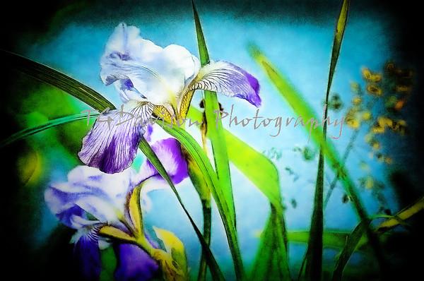 Digital Flower Paintings 6/2020