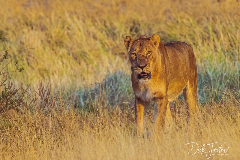Hwange National Park, Zimbabwe, Africa