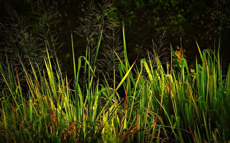 The Magic of Light-388.jpg