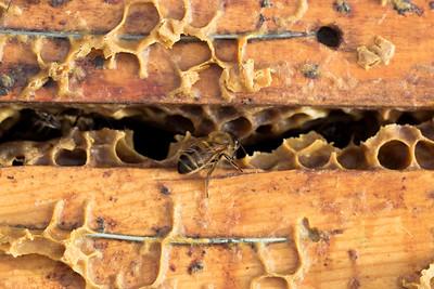 Muertes masivas de abejas en Valencia