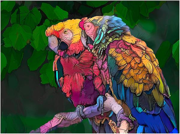 Parrots multi