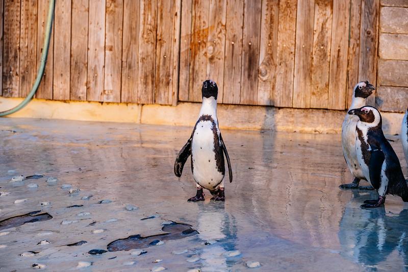 Tonis Zoo-0449.jpg