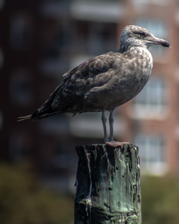 Birds Of Sheepshead Bay