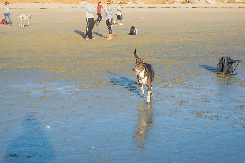 dogs_beach-37.jpg