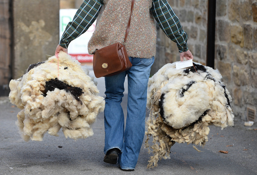 . MASHAM, UNITED KINGDOM - SEPTEMBER 28 A woman carries fleeces during the sheep fair in Masham September 28, 2013 in Masham. The fair, celebrating its 25th year, consists of many events over the weekend, including many sheep catagories such as sheep racing, sheepdog demonstrations and fleece stalls. (Photo by Nigel Roddis/Getty Images)