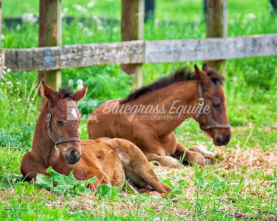 Kentucky Foals 2017