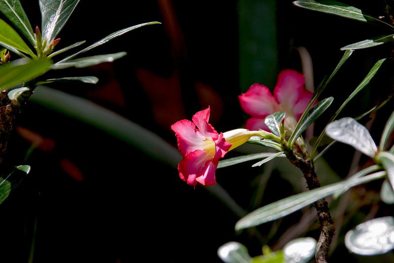 Flowerkk.jpg