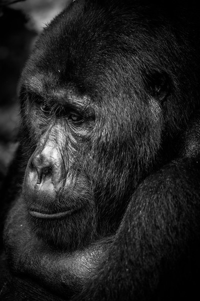 Uganda_T_Gor-2415.jpg