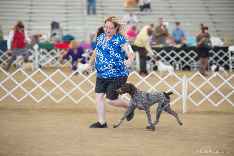 2019 Malibu Kennel Club-0009.jpg
