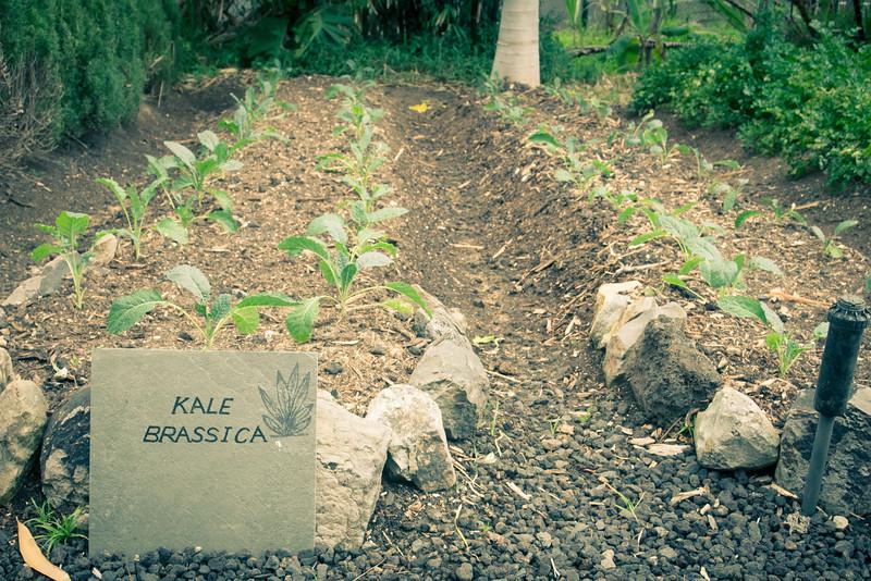 ritz carleton garden kale.jpg
