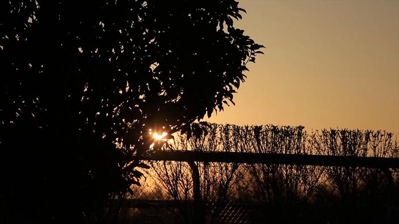 keeneland morning.mp4