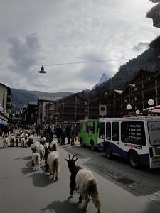 The Trekkers Swiss Haute Route - Chamonix to Zermatt,