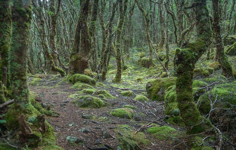 Tasmania_2015_090.jpg