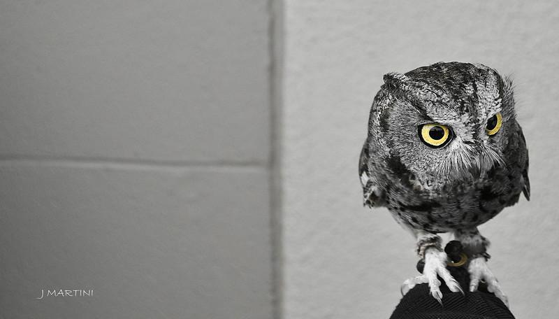 OWL EYES 12-14-2014.psd