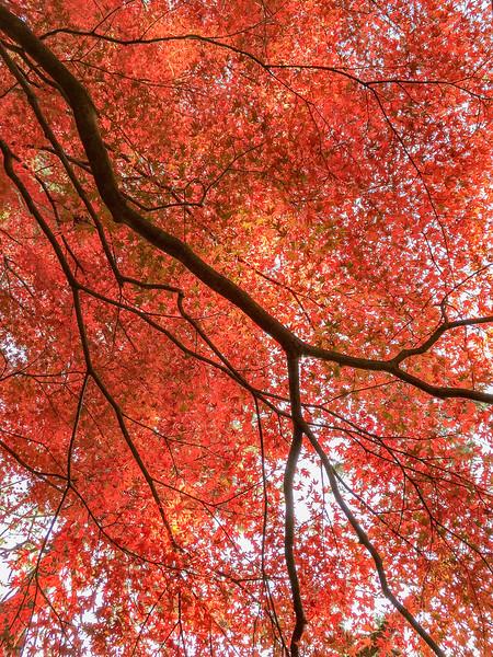 Kyoto12022018_087.jpg