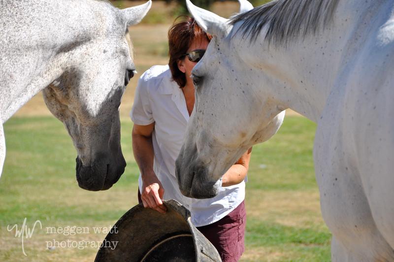 EB&Horses-011.jpg