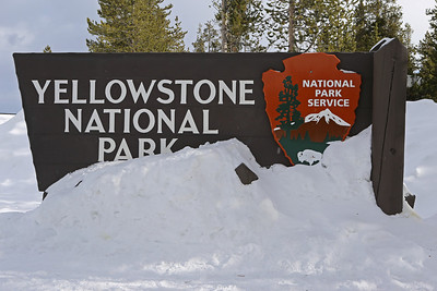 2014 Yellowstone National Park  - Winter