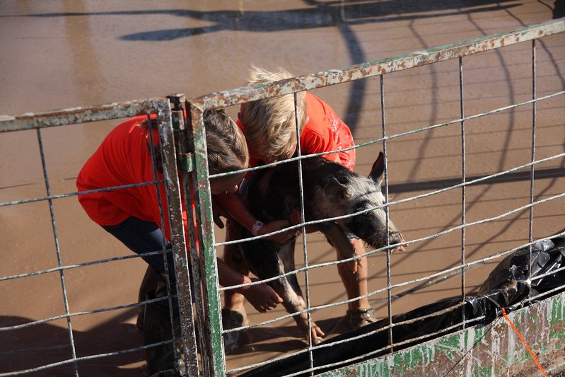 Havre Daily News / Floyd Brandt  Pig Wrestling at Blain County Fair Sunday team Pig Posse
