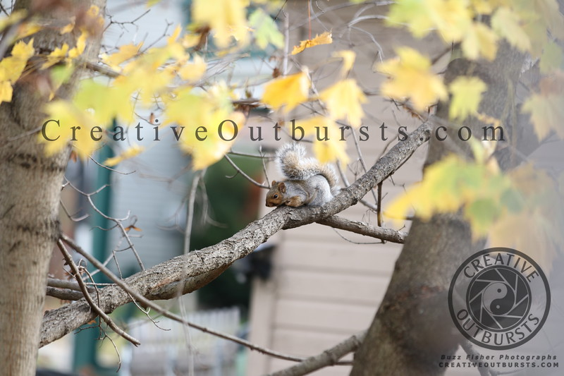 2019 11-3 Backyard Squirrel