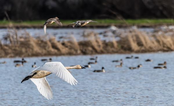 Sacramento Area Wildlife
