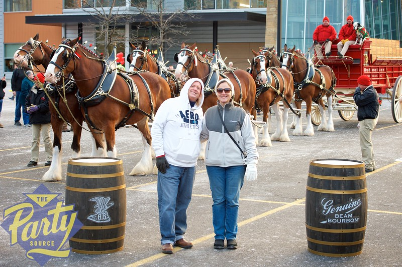 Clydesdale Portraits 118.jpg