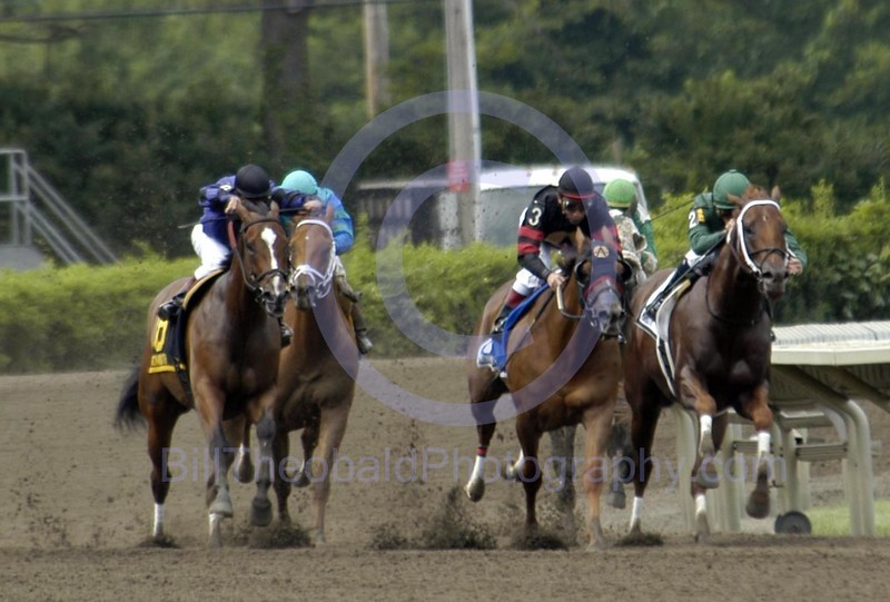 And Down the Stretch they Come!  A field of thoroughbreds spins out of the turn at Monmouth Park in Oceanport, New Jersey.