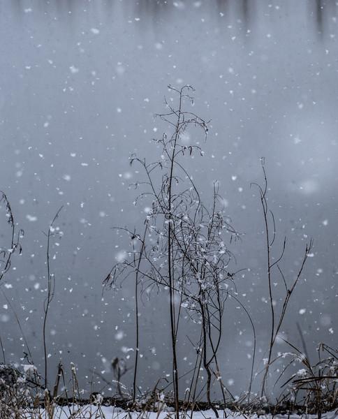 Chaska April Showers-76.JPG