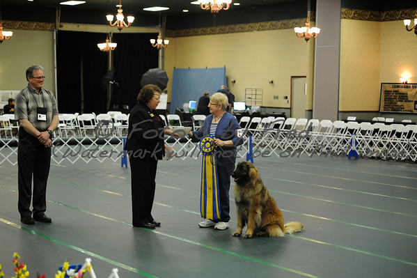 2012 Leonberger National Specialty