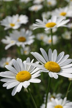 Flowers_060510_0008.JPG