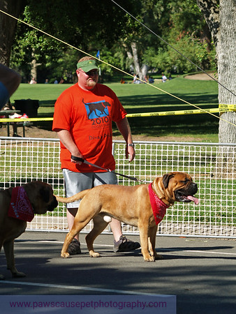 17th Annual SPCA Doggy Dash
