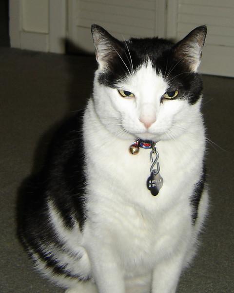 2007 06 22 - Cats 12.JPG