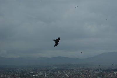 Nepalese Himalayan birds, July 2010