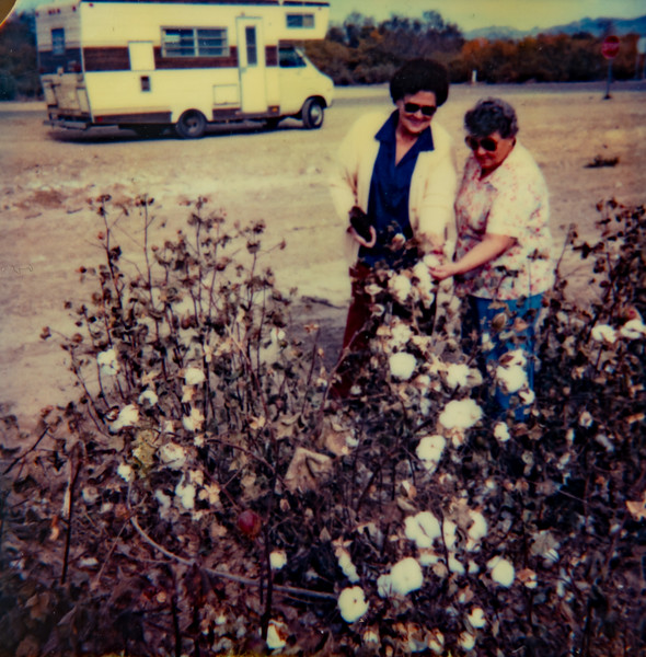 Mae Betty Piersol and Josephine on Thanksgiving Day picking cotton in a cotton field just out side of Oatman, Azizona. 1981-11-26