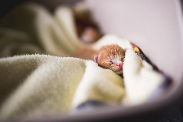 Summer of kittens