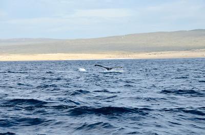 Cabo and Humpbacks