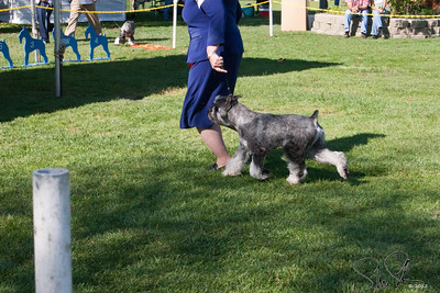 Specialty Dog Show - 2005