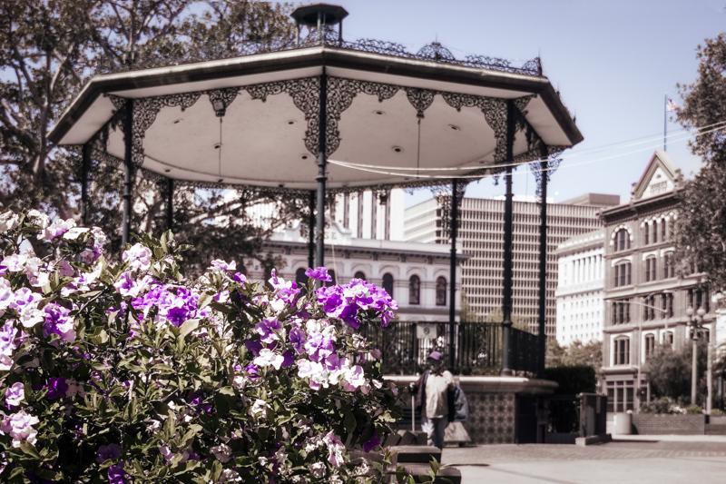 June 1 - Spring time lavender and whites of La Plaza at El Pueblo de Los angeles.jpg