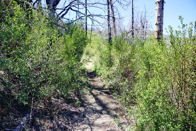 20170430021-Vetter Chainsaw Trailwork.JPG