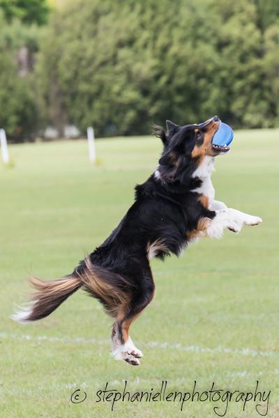 _MG_2821Up_dog_International_2016_StephaniellenPhotography.jpg