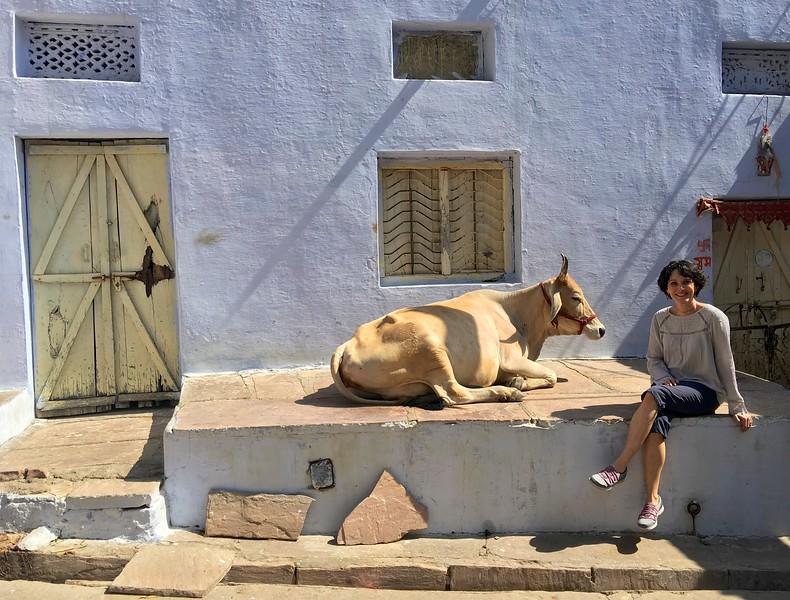 Blues and bulls of Bundi