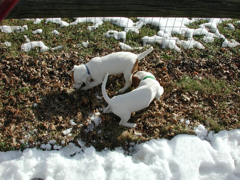 Feb 05- Puppies 005.jpg