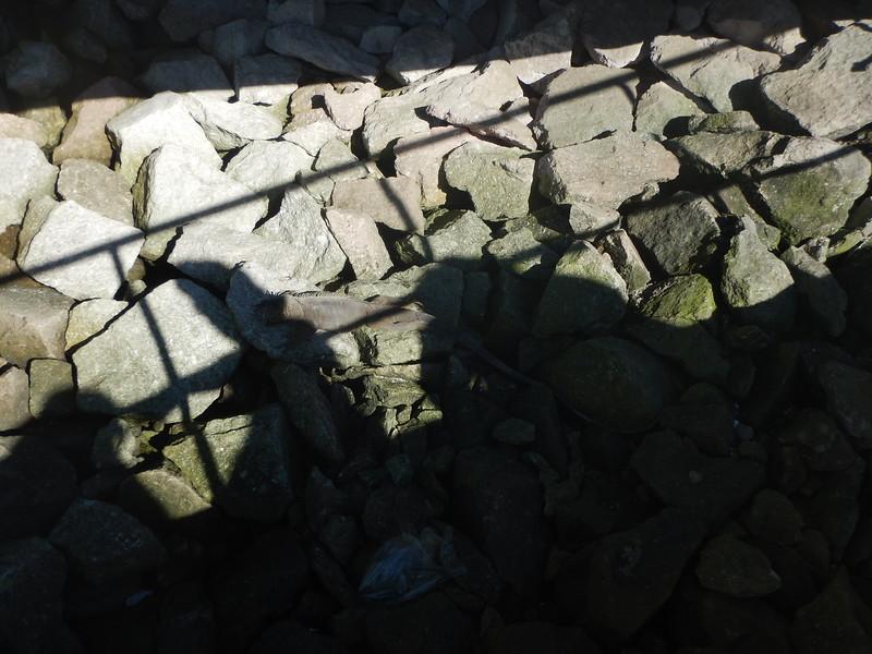 Mazatlan 2015 (206).JPG