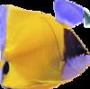 angel fish 1
