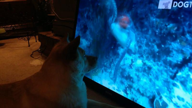 Fox and DogTV 2