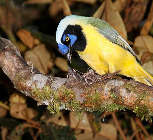 Ecuador 2005 2006 2009 2015