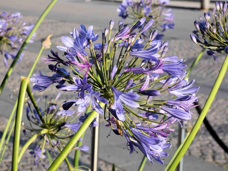 Stockholm-flowers at Es door.jpg