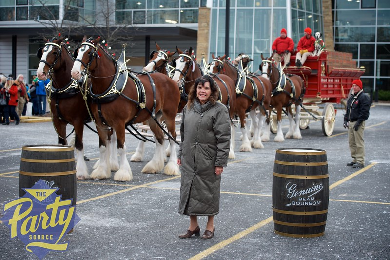 Clydesdale Portraits 16.jpg