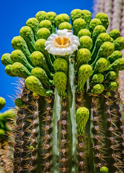 saguaro print.jpg